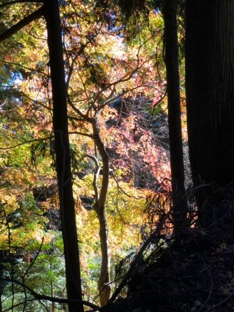 御岳山 ハイキング 表参道 紅葉